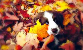 cute puppy leaves