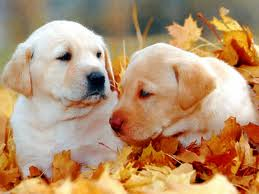 cutest puppies in leaves