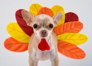thanksgiving-puppy1