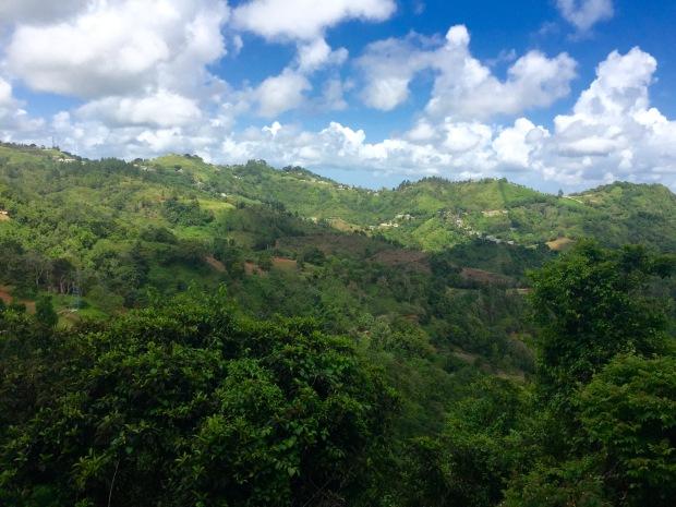 Puerto Rico Toro Verde