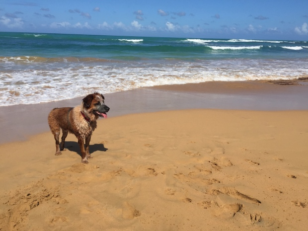 dog beach puerto rico