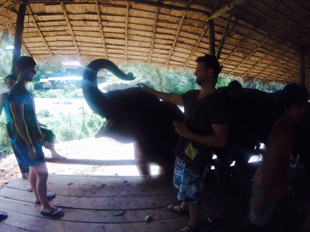 elephant jungle sanctuary cristina nogueras beaches & brie thailand