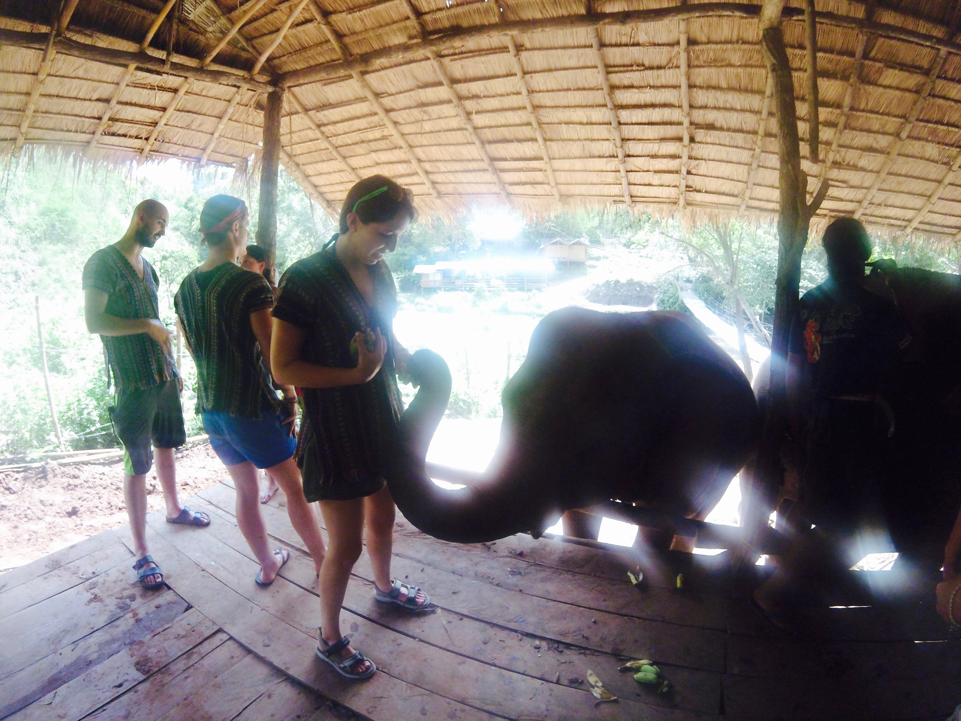 elephant jungle sanctuary cristina nogueras beaches & brie thailand